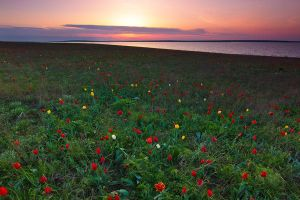 Sunset on the Tulip island by DeingeL