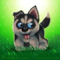 Puppy Husky by shatos