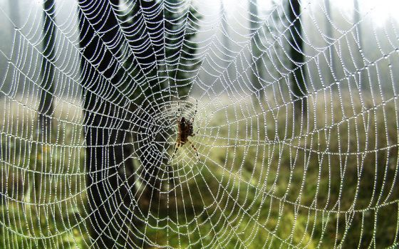 Spider on a spider web by JacekWolski