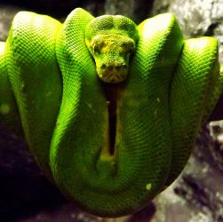 Green snake by ANorthernStar