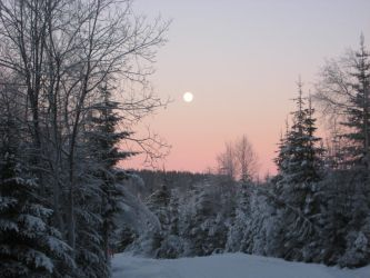 Moon, Snow and Trees by Headwig