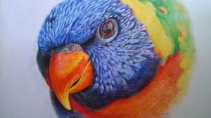 Rascal the rainbow lorikeet Daylight shoot by jyacini