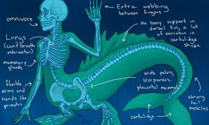 Mermaid Anatomy by SilentCyllya