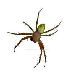Spider PNG by Bunny-with-Camera