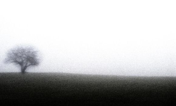 Lonely tree by nokel