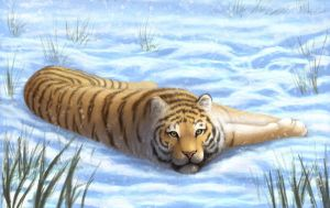 siberian tiger by dlovely1