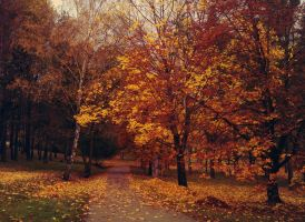 In autumn colours by katush017