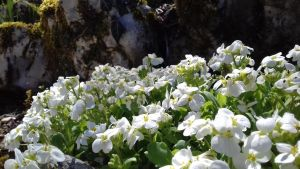 White Flowers by EtoileAuxAilesNoires