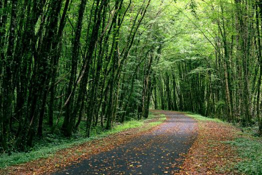 The path by sourpepper