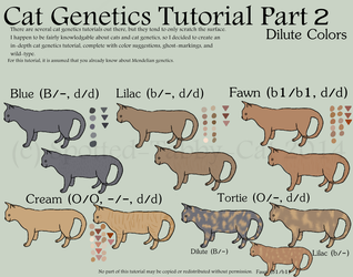 Cat Genetics Tutorial Part 2 (Dilute Colors) by Spotted-Tabby-Cat