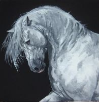 Andalusian Stallion by Tenrou-RT