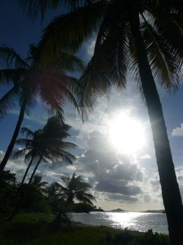 Of Islands and Palms by rosedraquia