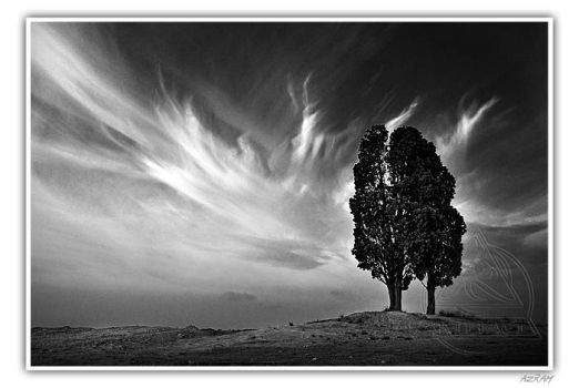 Arbres remarquables by Azram
