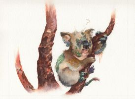 Warty or Snaggle-tooth Koala by evanjensen
