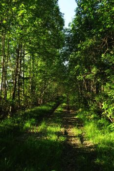 Spring forest 6 by MASYON