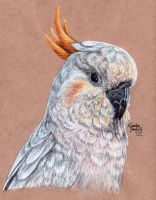 Citron-Crested Cockatoo by KristynJanelle