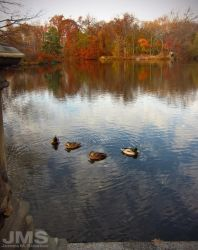 Central Park Duck Pond by steeber