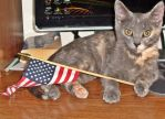 The Flag holding Cat by obeyyourmaster