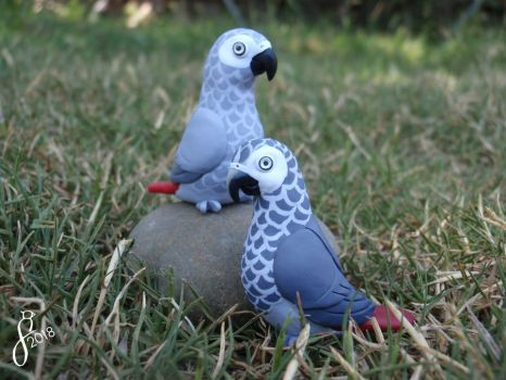 A Pair of African Greys by The-Wandering-Bird