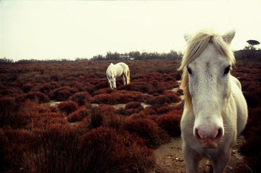 White horses 03 by SOFIg
