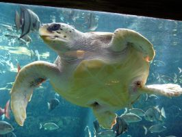 Sea Turtle 1 by LinzStock