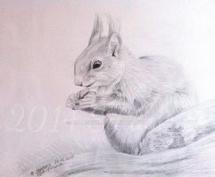 squirrel (pencil drawing) by Sillageuse