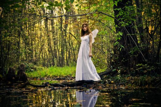 Enchanted forest by ideea
