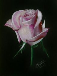 Rose Drawing by golfiscool