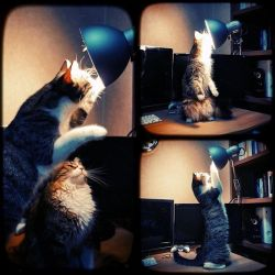 how many cats does it take to change a light bulb? by cheyrek