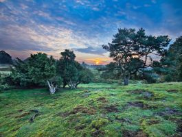 Sunrise over the Juniper Grove by zeitspuren