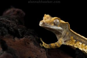 Mini Monster by Alannah-Hawker