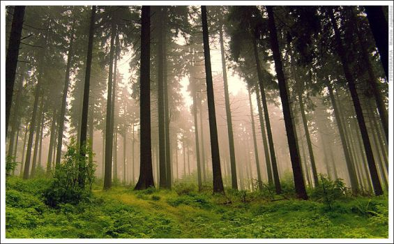 Summer forest by mjagiellicz