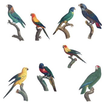 Variety of Parrots PNG by chaseandlinda