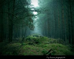 Foggy Magical Forest by FilipR8