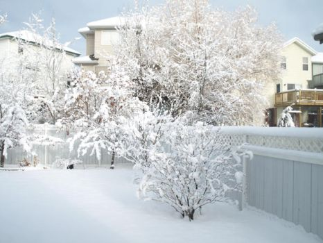 snowy backyard by udnaan