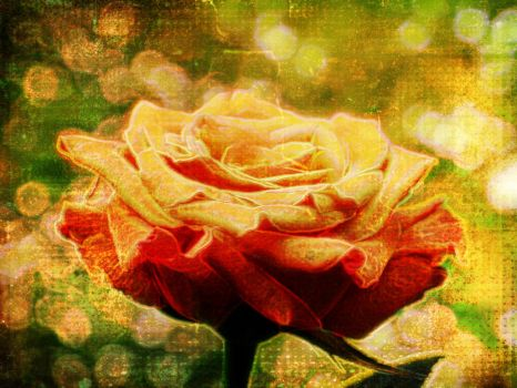 Rose effect 2 by nadinedavid