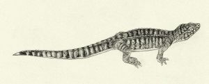 Monjurosuchus by Kahless28