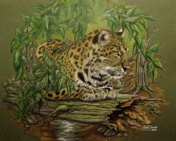 Leopard lying on a log by Artsy50