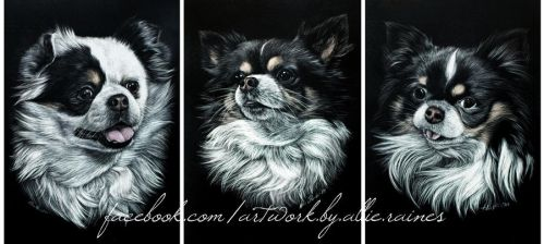 Piggy, Maggie, Jenny (scratchboards) by AllieRaines