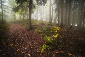 Signs Of Autumn by MarcoHeisler