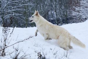 Playing in the snow by lichtschrijver