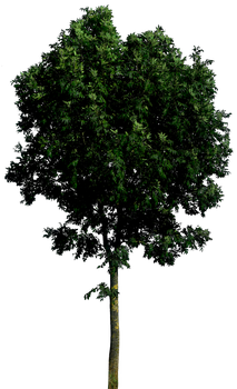 Tree 55 png HQ by gd08