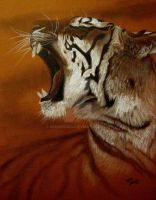 Tiger3 by brooks1904
