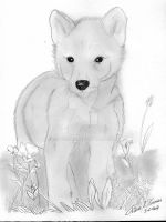 Wolf Cub by superzebra