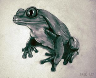 Red Eyed Tree Frog by Abiogenisis