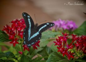 Magical wings. by Phototubby
