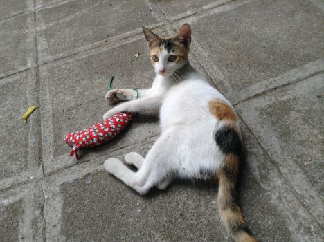 Little Shaela Calico and Her Mousie by dorkycats