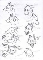 Wolf Facial Expressions Prt 1 by Mongrelistic