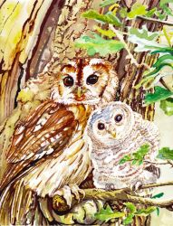 Owl and Owlet Commission by kgemeni