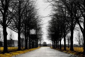 The road by BeriaDesign